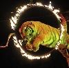 Цирки в Успенском