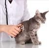 Ветеринарные клиники в Успенском